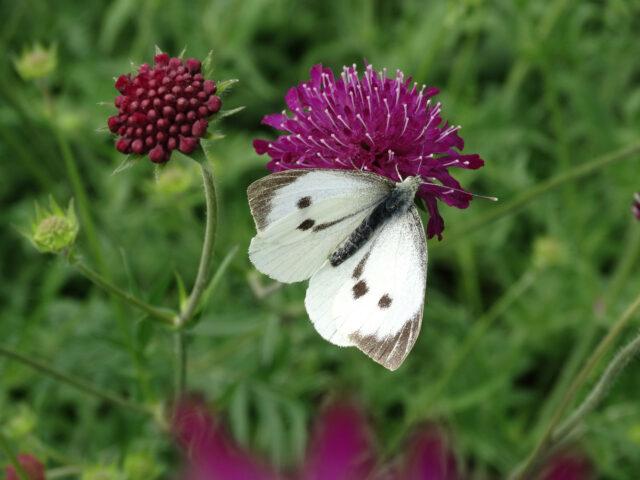 Butterflies and Solar